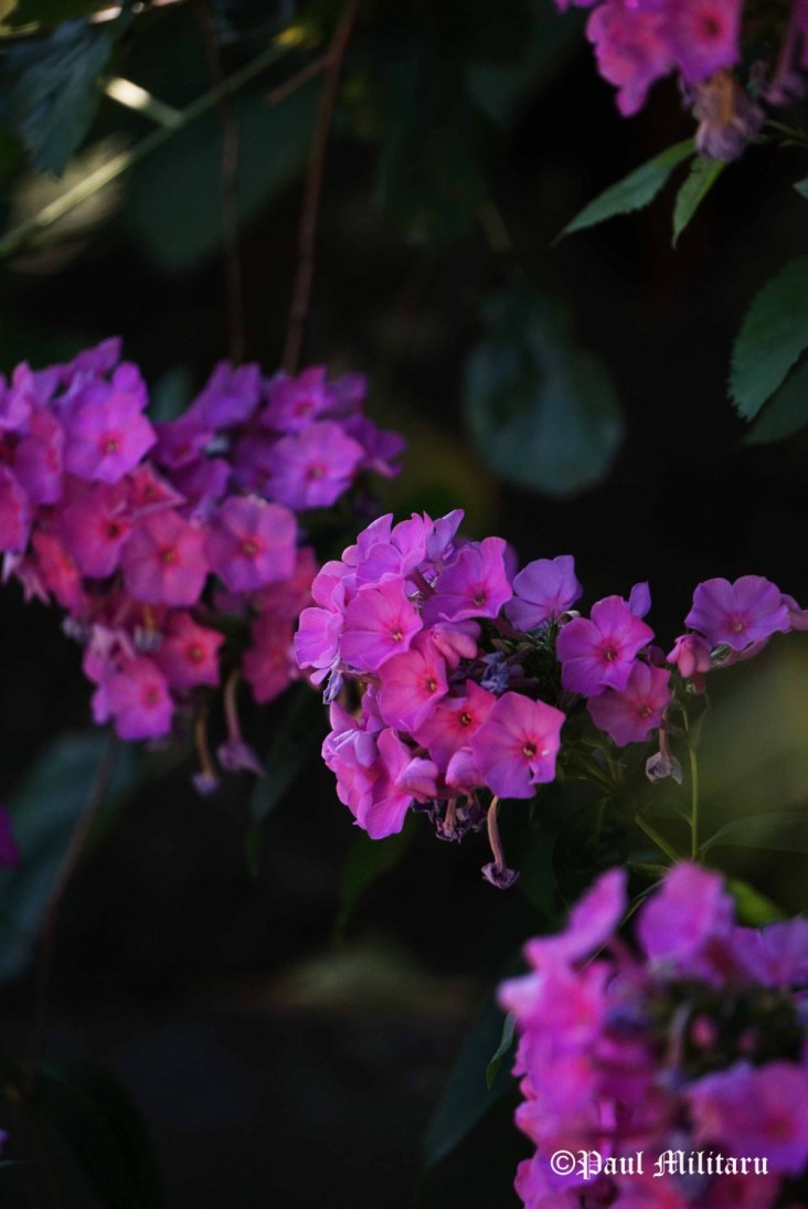 """A Deep Purple"" - Paul Militaru Photography"