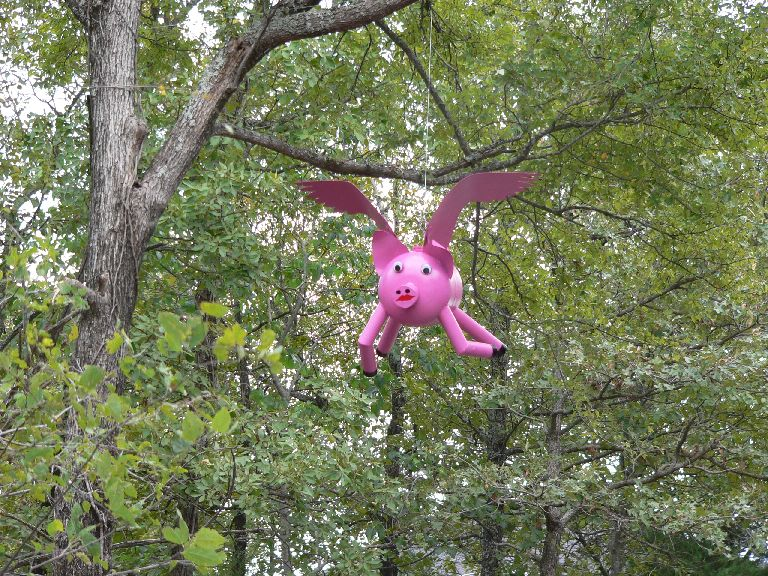 pigsfly1