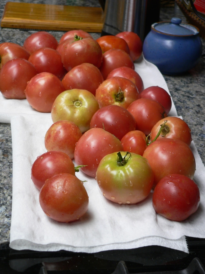 tomatoes2-July14