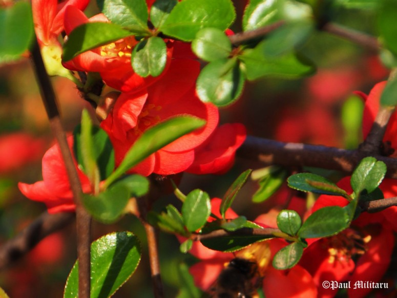 """""""Colors: Red and Green"""" - Paul Militaru Photography"""