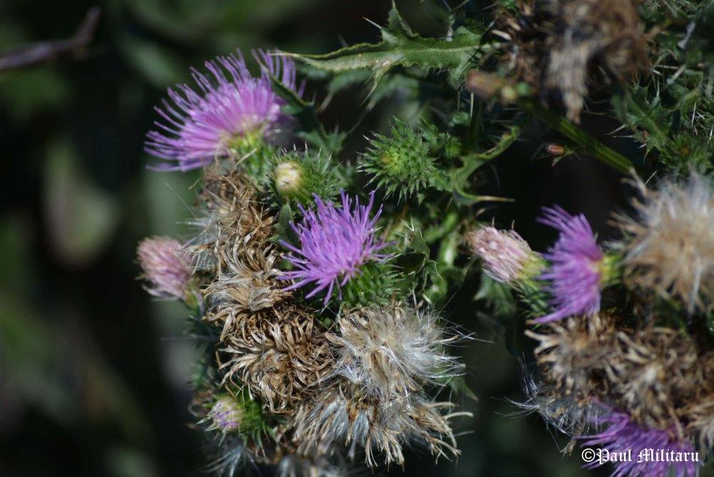 """Flower Thorns"" - Paul Militaru Photography"
