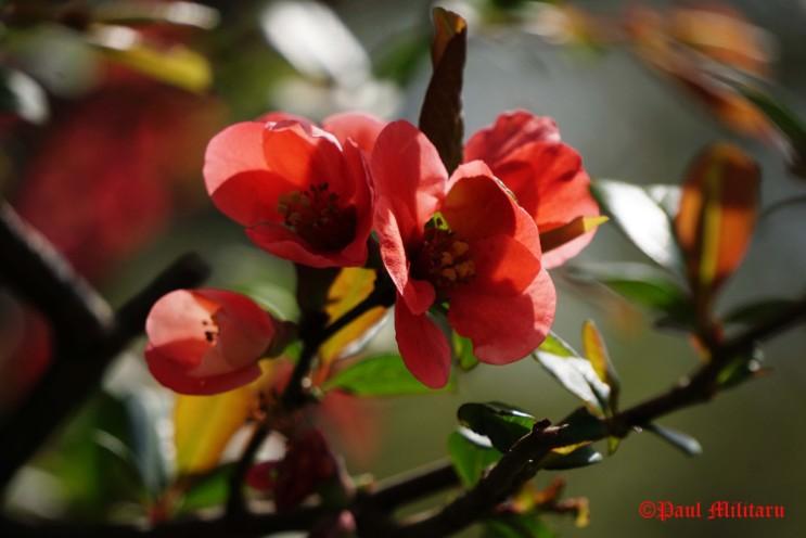 paul-red-flowers