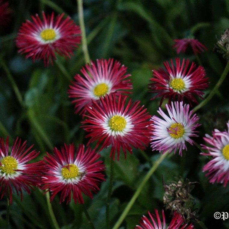 """Small Beauties of Nature"" - Paul Militaru Photography"