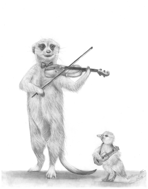 b-meerkat