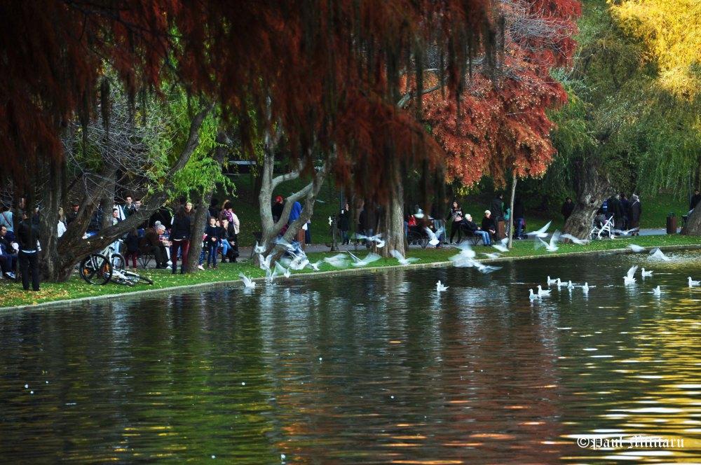 """Warm Colors of Autumn - Paul Militaru Photography"
