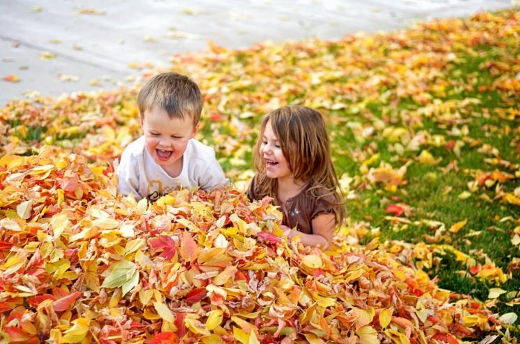 leaves-thehotpotato-wordpress-com