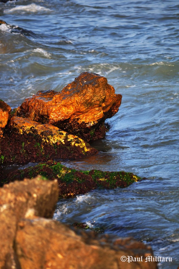 """Rocks, Algae, and Sea"" - Paul Militaru Photography"