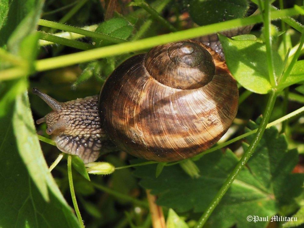 """Snail's Pace"" - Paul Militaru Photography"
