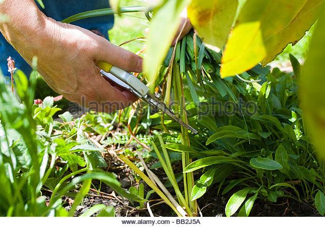 pruning-alamy