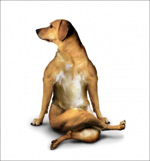 yoga-mybassetdog-blogspot-com