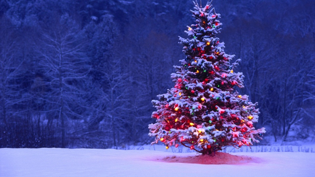 Marldon Christmas Trees