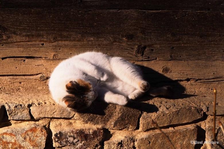 paul-lazy-cat-under-the-sun
