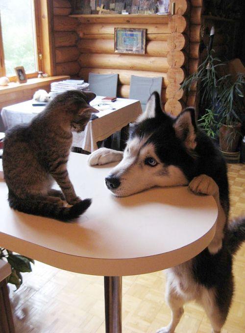dnc22-wolfdogblog