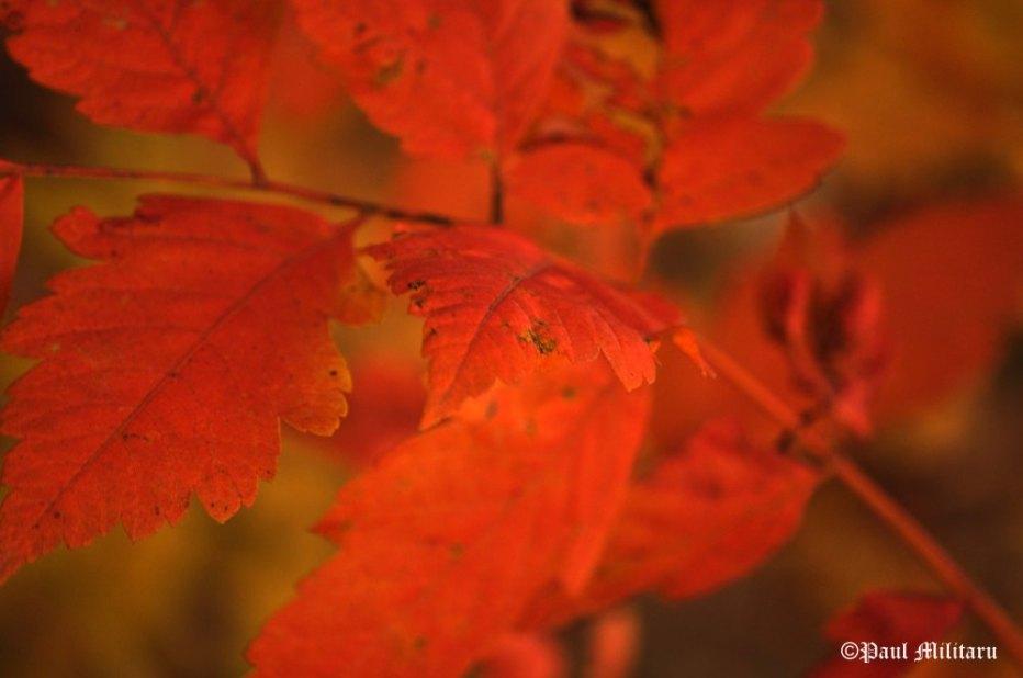 """Art - Orange on Orange"" - Paul Militaru Photography"
