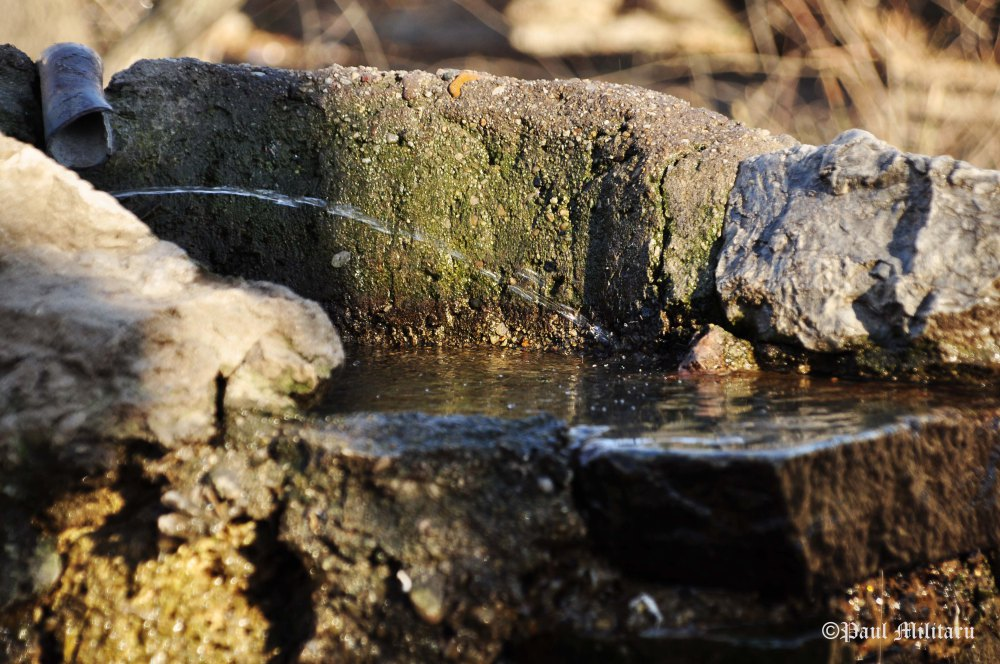 """Water Spring"" - Paul Militaru Photography"
