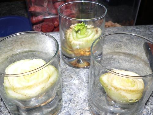 celeryinglasses