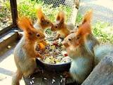 Friends at Lunch - Pinterest