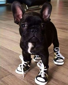 Hugo - the Sneakerhead - Pinterest