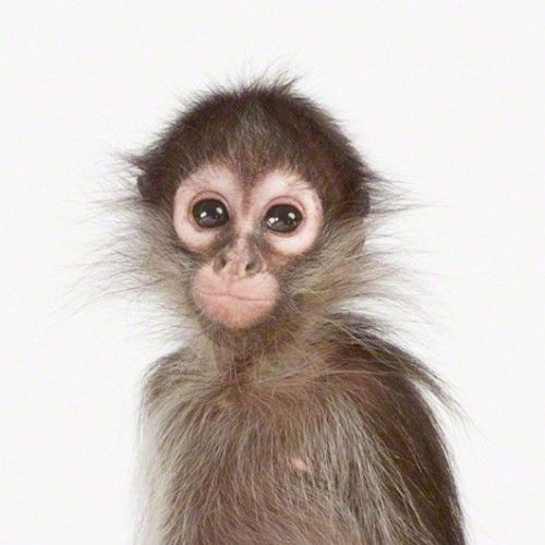 """Monkey Trouble"" - Hollis J. Works"
