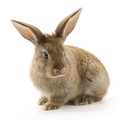 rabbit-havahart