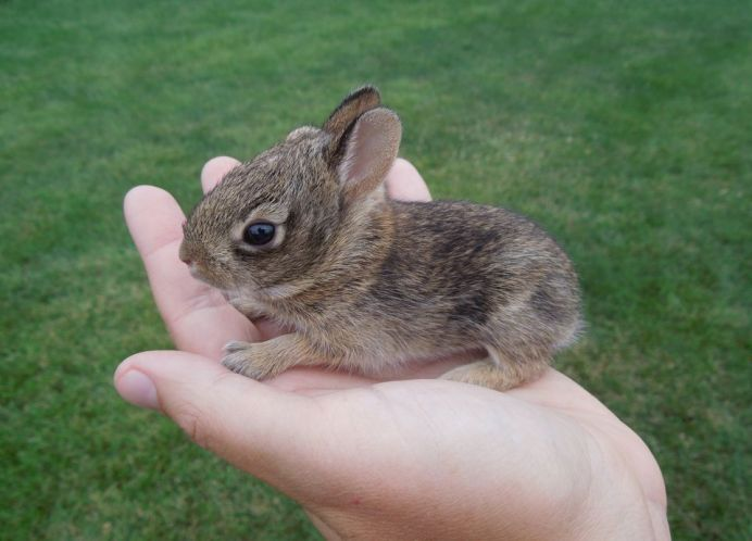 rabbit-natlgeo