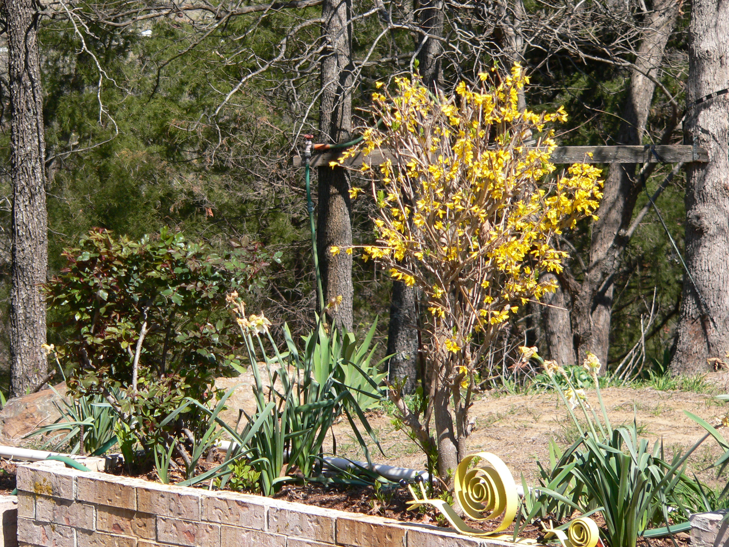 gardening in Greenwood Arkansas   creativeartworksblog
