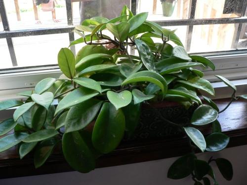 ws-longtimeplant