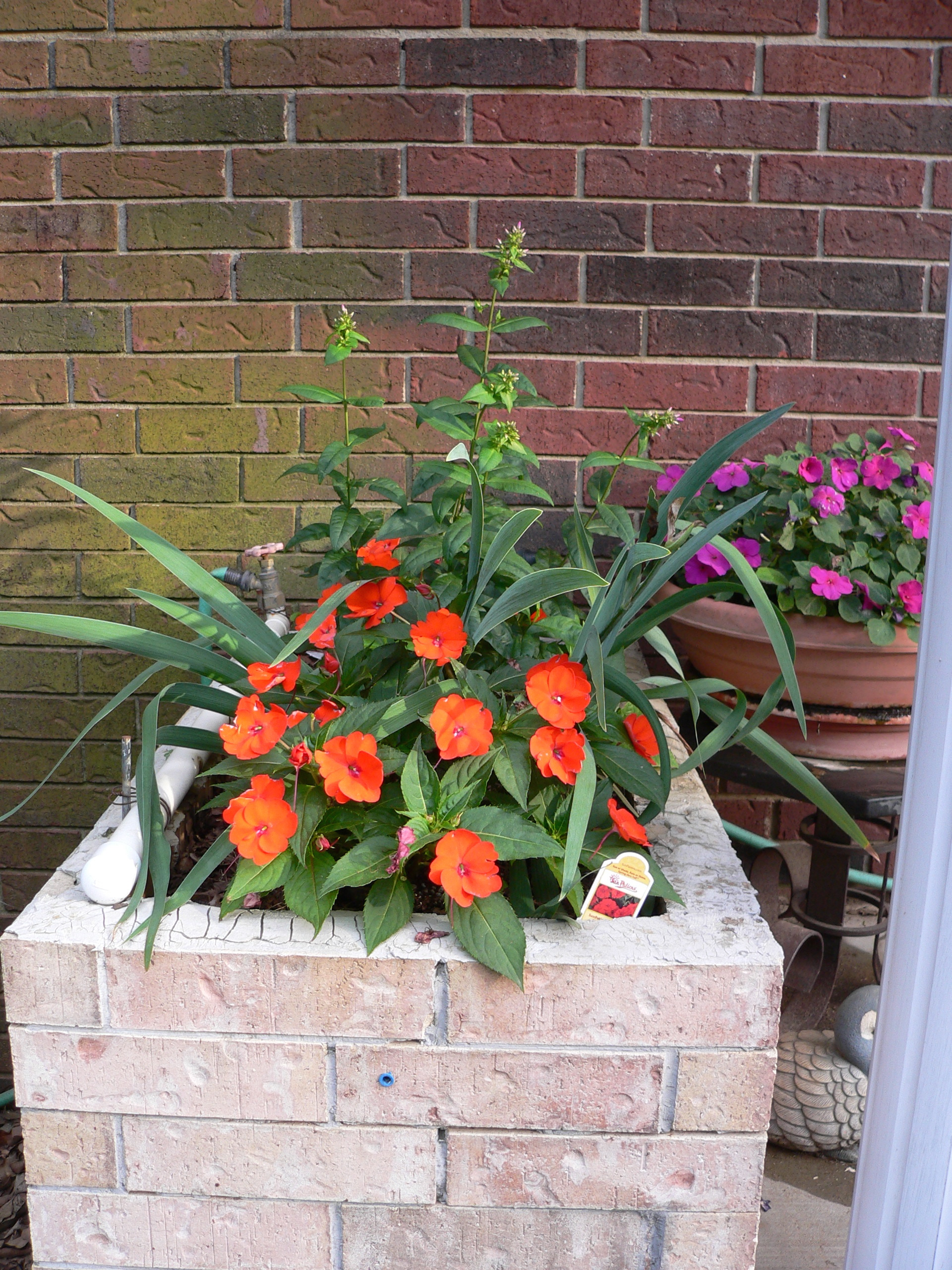 Flower quotes creativeartworksblog two colors of impatiens plus phlox about to bloom and iris izmirmasajfo