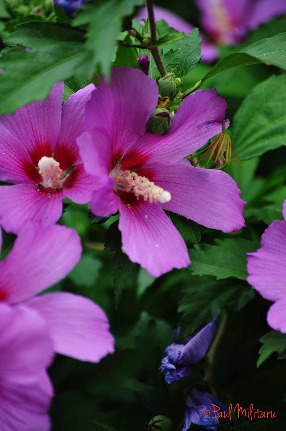 Pinklight Purple Flowers Creativeartworksblog